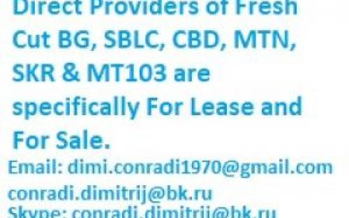 Direct Providers of Fresh Cut BG, SBLC and MTN